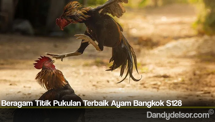 Beragam Titik Pukulan Terbaik Ayam Bangkok S128