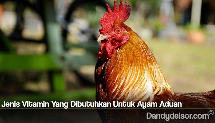 Jenis Vitamin Yang Dibutuhkan Untuk Ayam Aduan